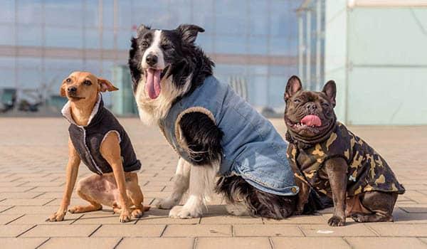como hacer abrigo para perros